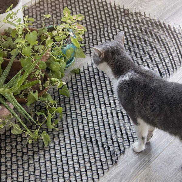 Cat scat mat
