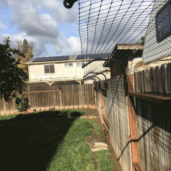 fancing to cat away from garden